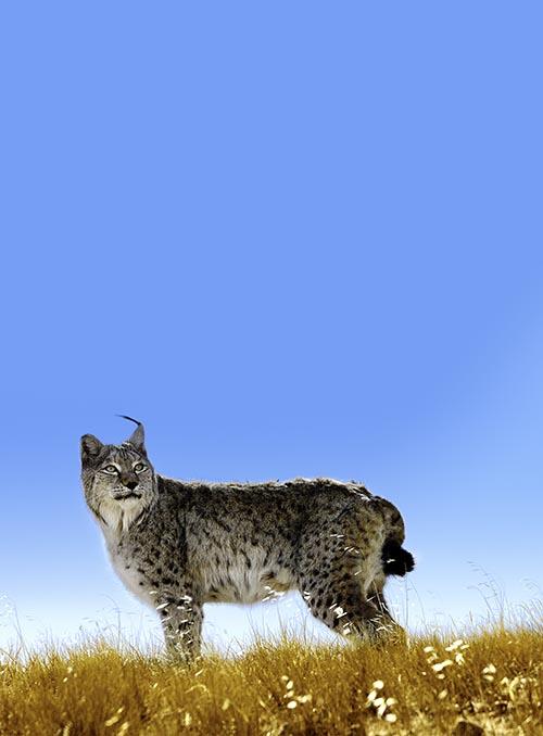 保护野生动物(1)