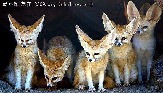 狐狸是不是保护动物